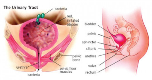 The bladder area