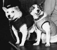 Belka and Strelka, the space Dogs.