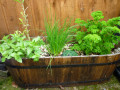 How to Grow An Herb Garden