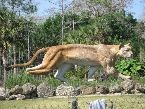 Sculpture of the Florida Panther near Naples on US Route 41, the Timiami Trail.