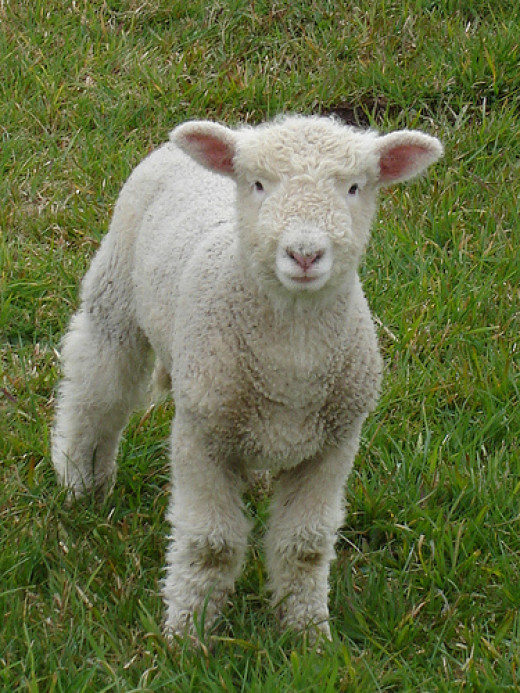 Horses are beautiful, but then Lambs are pretty cute too.