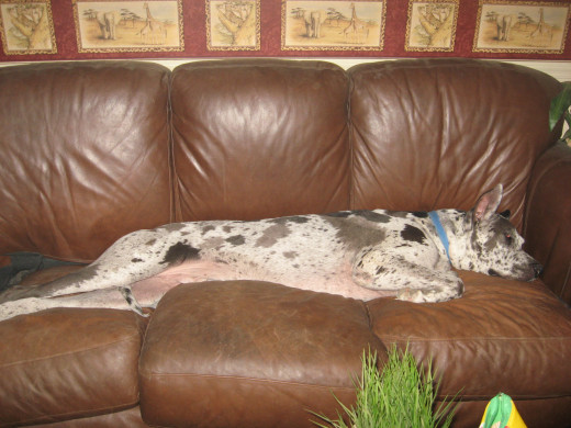 Really, Grendel? The entire sofa?