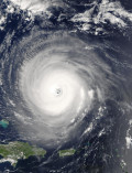 How to Prepare Your Pet for a Hurricane: Disaster Plans and Pet Friendly Shelters