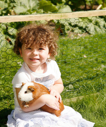 Child Holding Guinea Pig