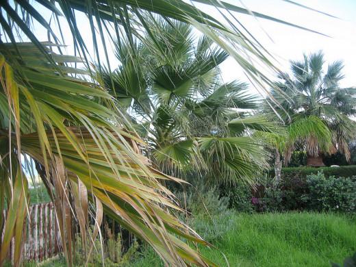 Garden - Latchi beach front bungalows