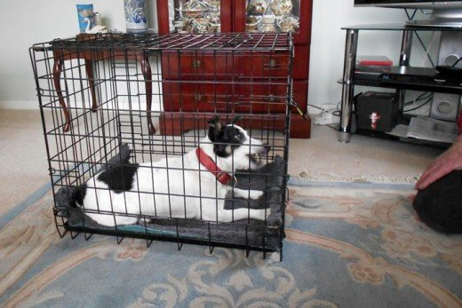 If your dog is excited when you return, it is a good idea to sit quietly with him and talk to him for a few moments before letting him out of the crate - Bandit is pleased to see my husband, as you can see!