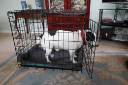 It is important at the beginning to leave the crate door open so your dog can go in and out as he wishes.