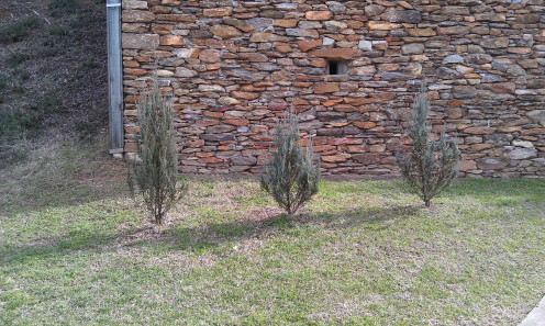 Three firs to symbolize the Trinity.  The gun turret is visible in the wall behind.