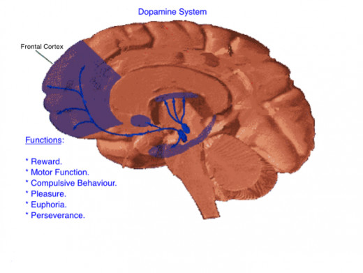 diagram 2: The Dopamine System
