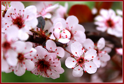 Let the beauty and renewal of springtime fill your heart and mind.