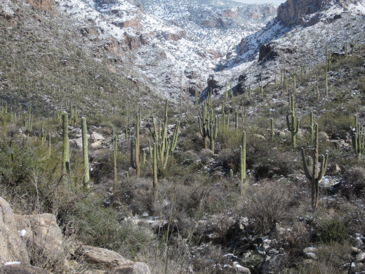 Approaching mouth of Finger Rock Canyon in Tucson's Santa Catalina Mountains