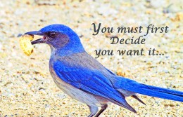You must first decide you want it...then take action.