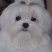 Clarisa profile image
