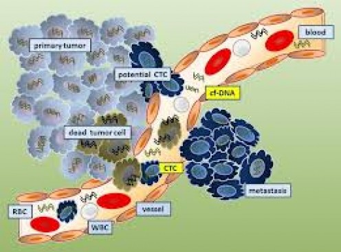 Cellular flow
