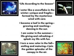Life According to the Season