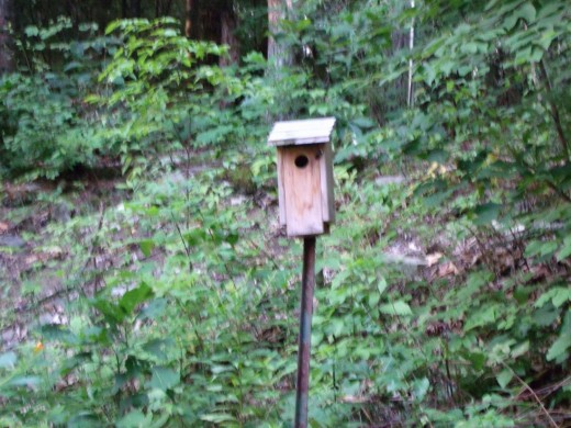 This is a bluebird house, but a chickadee nests in it every year!  It has a front door that opens and closes securely for observing and cleaning.