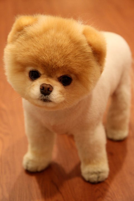 One more fact, this dog as known as the cutest dog in the world around the internet. And I wanted an excuse to add a picture of an adorable dog.