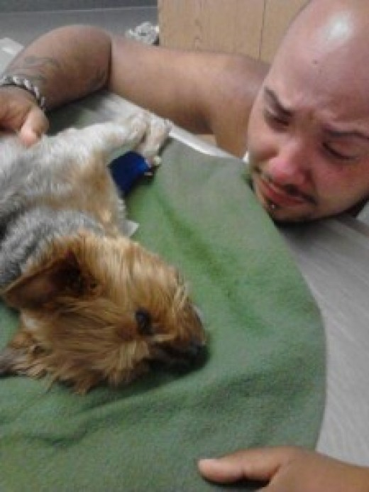The man photographed above is crying over his dead dog, the cause of death: tainted dog treats made in China. He wants this picture to spread like wildfire so that no one else has to deal with such an avoidable death.