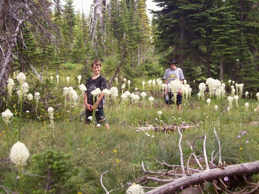 My Kids in the Bear Grass - 2010