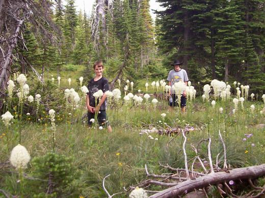 My Kids in the Bear Grass - 2010