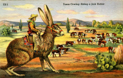 Jackrabbit Riding Cowboys