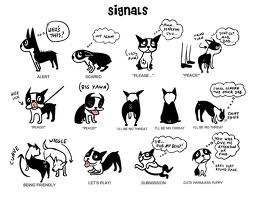 dog body language
