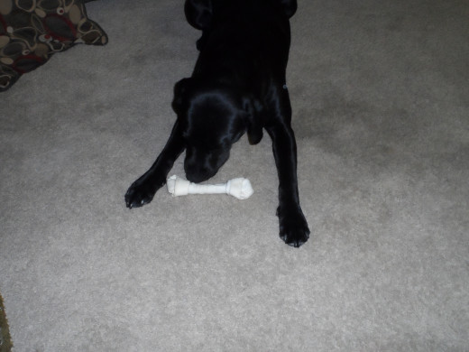 Rawhide bones are her weakness
