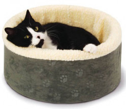 Adopting a Kitten: How to Prepare Your Home for Your New Indoor Cat
