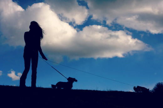 Walking satisfies a dog's need to explore.