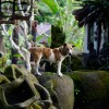 Dog Stories from Bali: Like A Fairy Tale