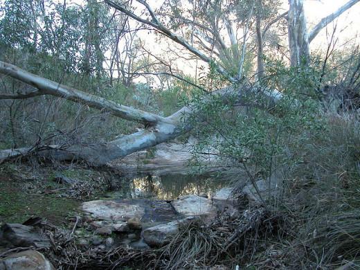 A creek in Australia's Outback region