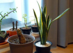 Keep your houseplants looking their best