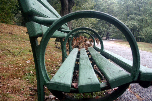 """Bench Concentric"" is a photo taken by my husband, along the Brookline branch of the Emerald Necklace in Boston"