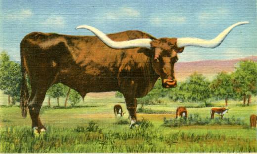 Curteich Linen Postcard