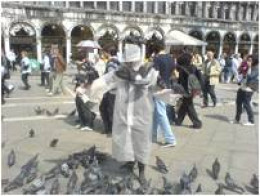 St Mark's Square dodging pigeons