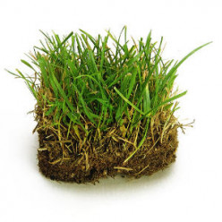 Quit Pickin' On Grass - Interesting Facts About Grass
