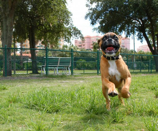 Off leash dog parks allow dogs to enjoy much needed romping and running.