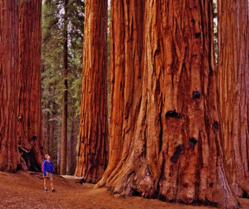 Sequoia National Park, USA
