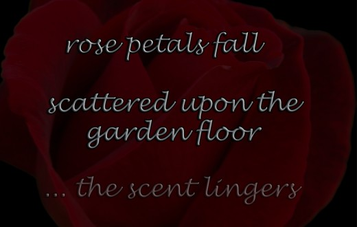 a trilinea incorporating a rose from the author's front garden
