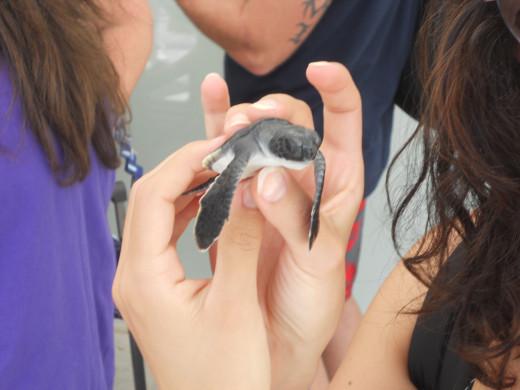 Turtle Farm, Grand Cayman, CI