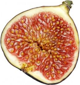 a cut fig
