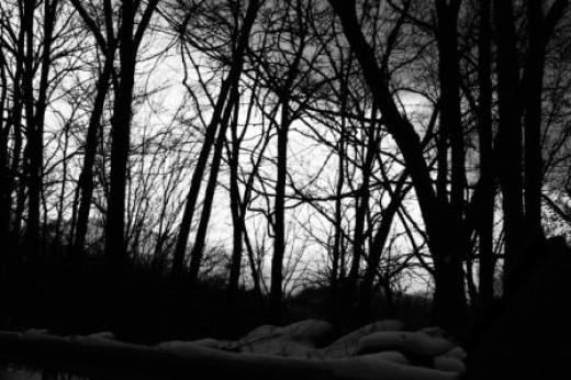 A winter silhouette photo I snapped recently in Western North Carolina.