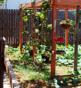 Grape Arbor with hanging strawberry baskets.