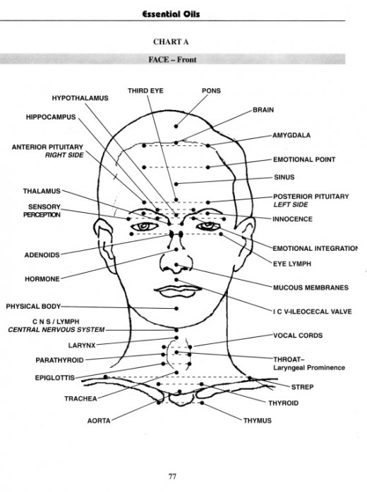 Face Lift Acupuncture Points Chart | hairstylegalleries.com