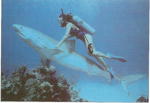 Humans and sharks can co-exist