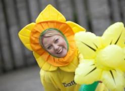 Daffodil - A World Wide Symbol of Hope