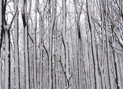 Snow Twigs; a wintry photo collage