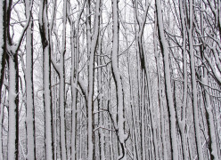 Snow Twigs; A Wintry  Photo Poetry Collage