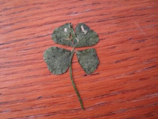 dried clover leaf