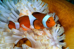 Are Clownfish Really Funny?